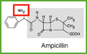 Aminopenicillins