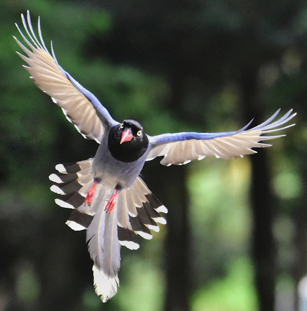 Researchers show how feathers propel birds through air and history
