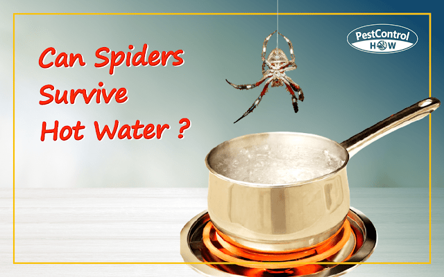 can-spiders-survive-hot-water