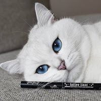 Source: KVD Vegan Beauty. Coby the Cat.