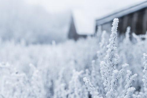 Beautiful Pic Of Winter.