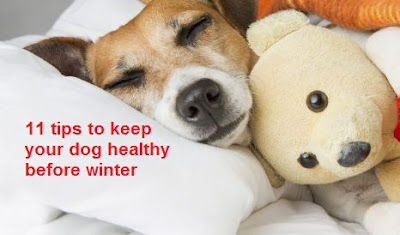 11 tips to keep your dog healthy before winter
