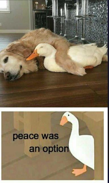 Peace was an option