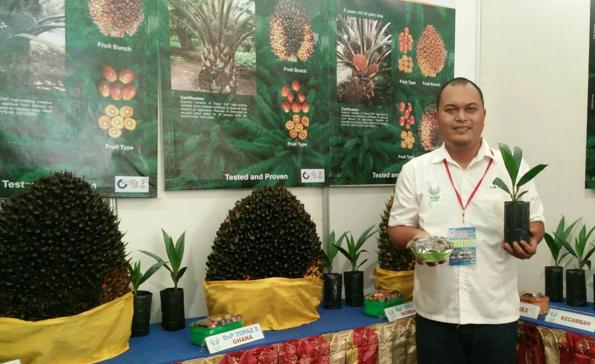 Benih Kelapa Sawit Topaz, Cara Perusahaan Sukanto Tanoto Tingkatkan Produktivitas