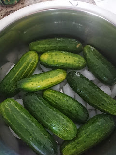 spreading the cucumbers on top of ice