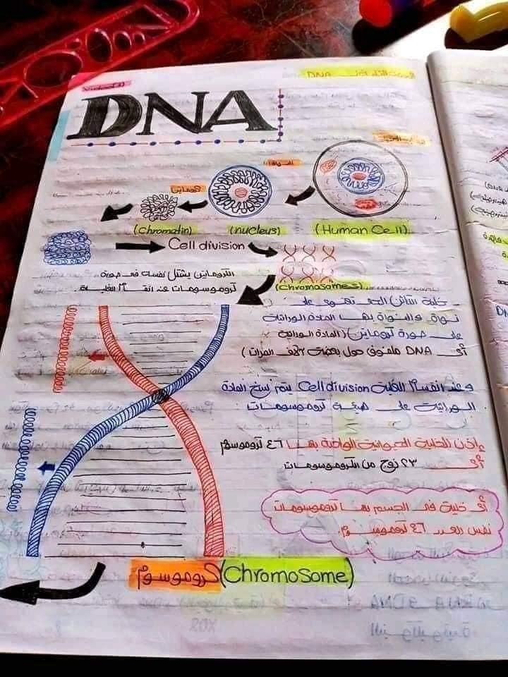 اقوي ملخص DNA تالته ثانوي 11