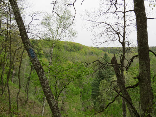 spring trees on hillside above Manistee River