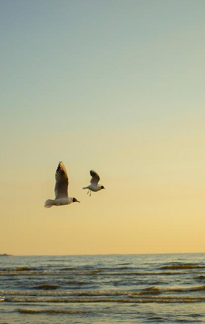 чайки закат Сестрорецк пляж на Юге два друга попутчики
