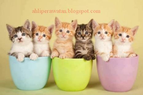 Inilah Makanan Terbaik Untuk Anak Kucing Yang Baru Lahir