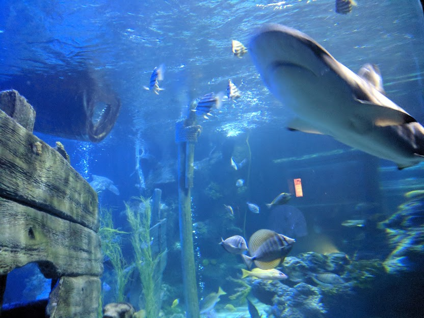 The Best Sea Life Aquariums in the UK  - Sea Life Alton Towers