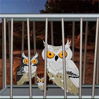 Games2Rule - Desert Great Basin Owl family Rescue