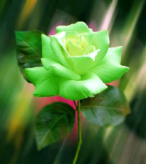 Pictures Of Beautiful Green Flowers