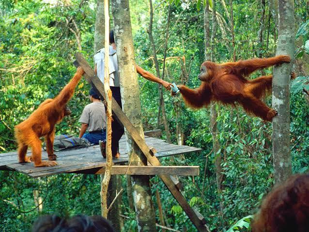 Melestarikan-hutan-dengan-Adopsi-hutan-7
