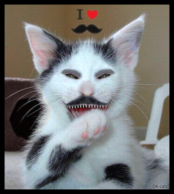 "Photoshopped Cat Pictures •  Mustache cat is laughing hard. Bur Why? ""Have you seen my sharp teeth, hahaha..."""