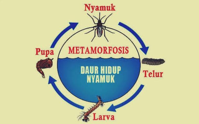 Daur Hidup Hewan : Metamorfosis Sempurna dan Tidak Sempurna