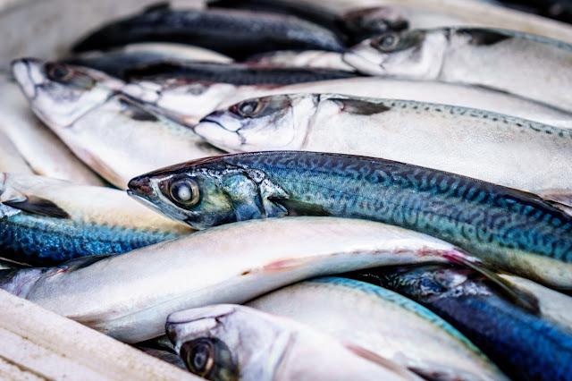 Balık resmi