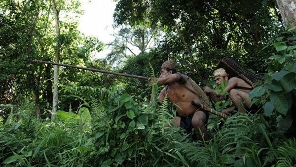 orang dayak dan hutan kalimantan