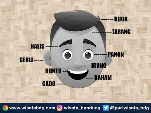 bagian bagian kepala dalam bahasa sunda