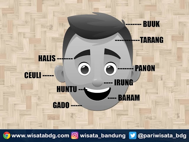 Nama-Nama Bagian Anggota Tubuh Manusia di Kepala dalam Bahasa Sunda Secara Lengkap