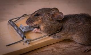 mouse trap diy