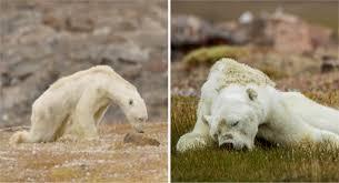 URGENTE: el ritmo del cambio climatico es aterrador.