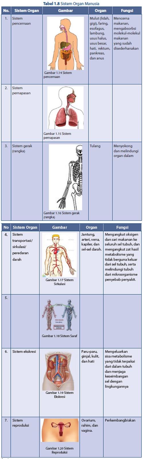 Sistem Organ Dan Organisme : sistem, organ, organisme, Sistem, Organisasi, Kehidupan, Makhluk, Hidup, Materi, Yuk!Belajar