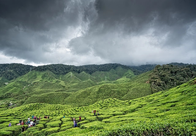 Cameron Highlands - Vacation Destinations in Malaysia for Your Holidays