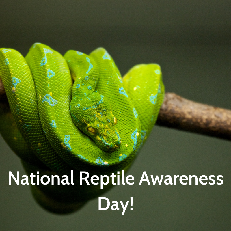 National Reptile Awareness Day Wishes Images download