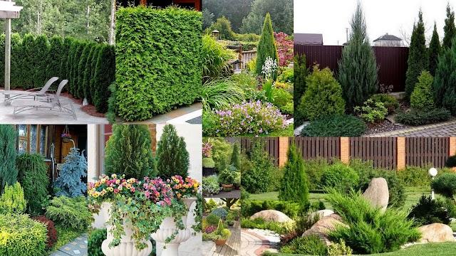 Διαμορφώσεις κήπου με Κωνοφόρα δέντρα
