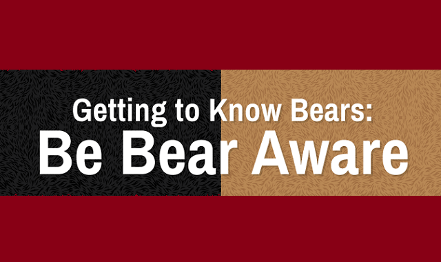 Getting to Know Bears: Be Bear Aware