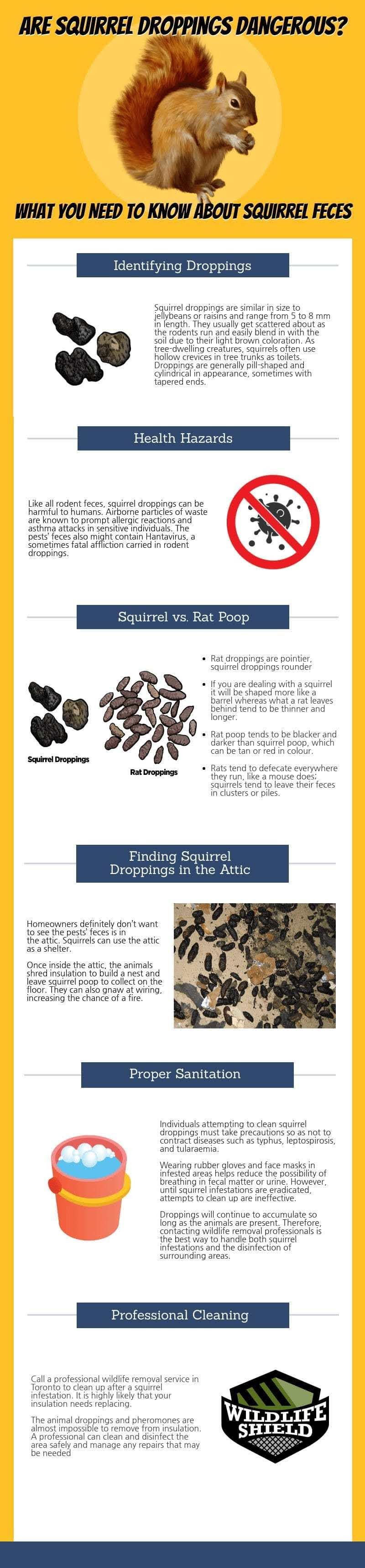 What You Need to Know About Squirrel Poop #infographic