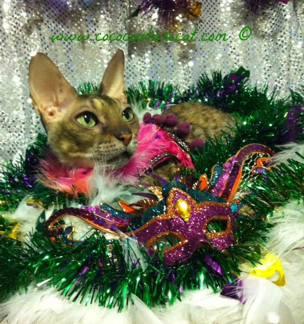 Coco the Cornish Rex cat Mardi Gras photo shoot