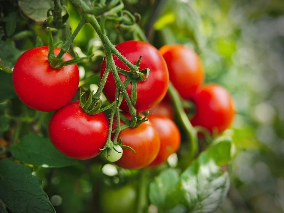 Cultivating Organic Tomato...What is Digital Marketing, and How Do You Use it in Business?