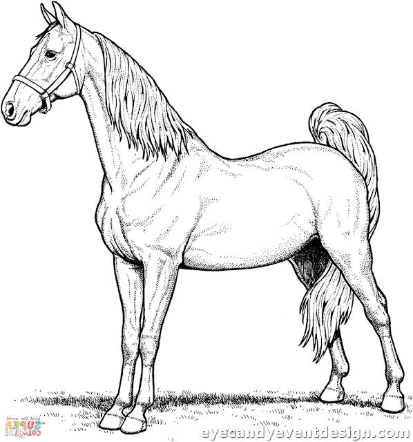 Pferde Malen, Ausmalbilder Pferde