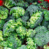 Is Broccoli Good for Gout?