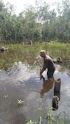 Sawah terendam Banjir Pemda Berikan Bantuan Benih