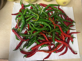 Cayenne Peppers drying on a paper towel