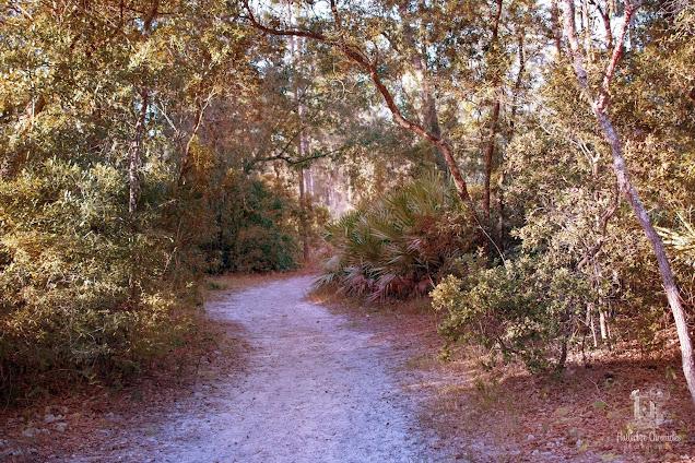 Fall Trail (©Jenny Bell @ Flutterbye Chronicles)