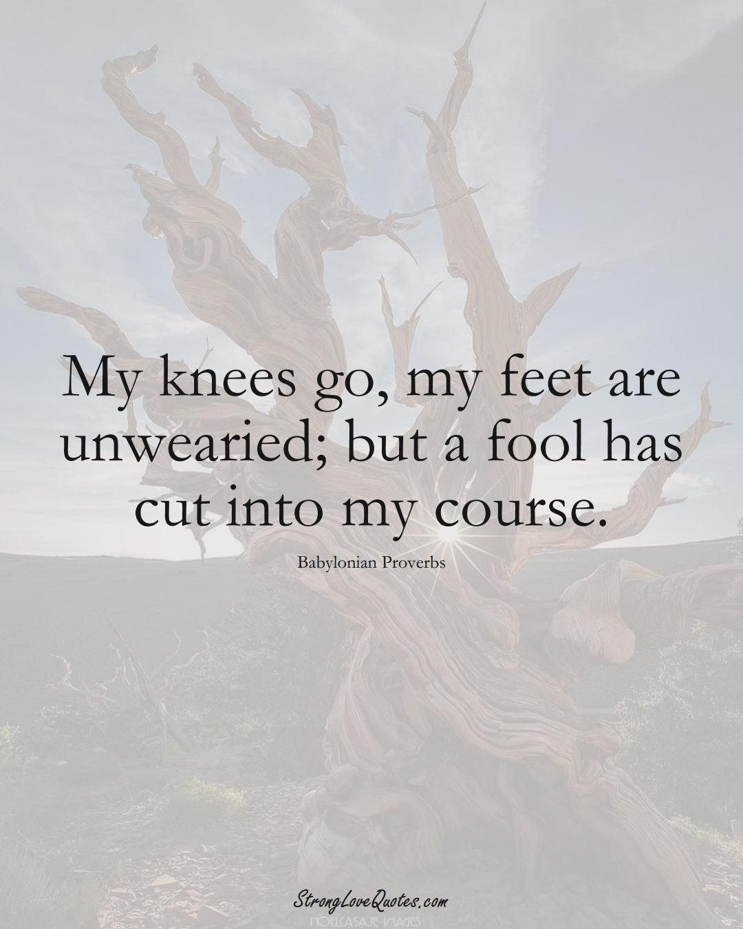 My knees go, my feet are unwearied; but a fool has cut into my course. (Babylonian Sayings);  #aVarietyofCulturesSayings