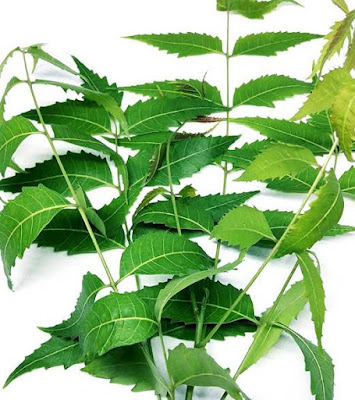 Surprising-Medical-Benefits-of-Neem