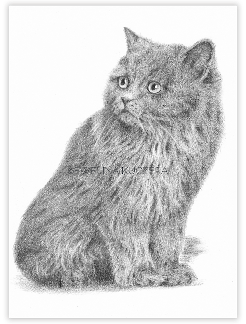 Kitten - step by step - graphite pencils