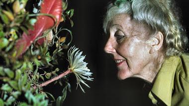 Margaret Mee y la belleza de las flores de la Amazonia