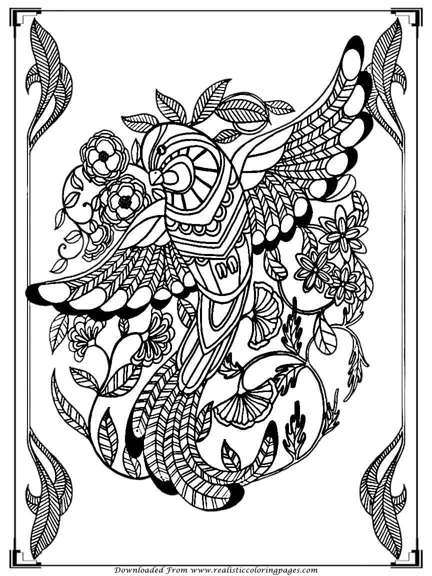 Printable birds coloring pages for adults realistic for Adult coloring pages printable