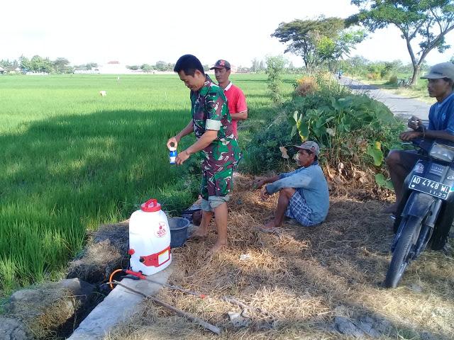 Babinsa Karangdowo Berikan Motivasi Untuk Petani