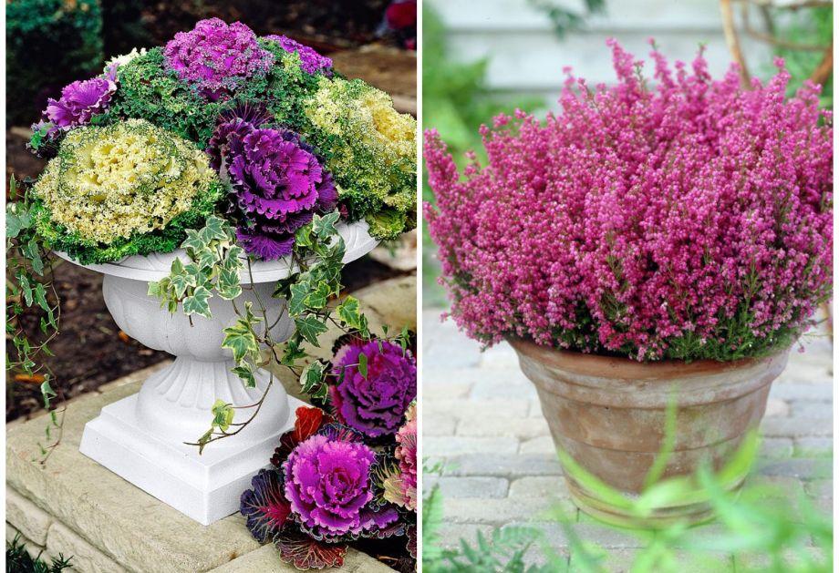 erika-cvijeće_jesen_zima_agronomija_vrt_uredi-dom_journal