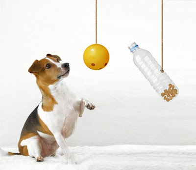 Right way to clean Dog toys and bowls