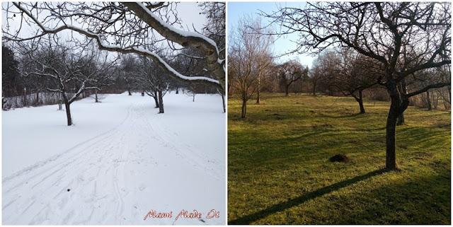Streuobstwiese - Meadow orchard Jänner vs Februar