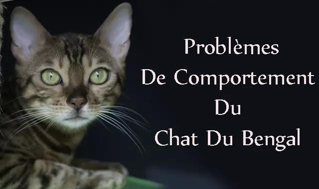 Problèmes De Comportement Du Chat Du Bengal