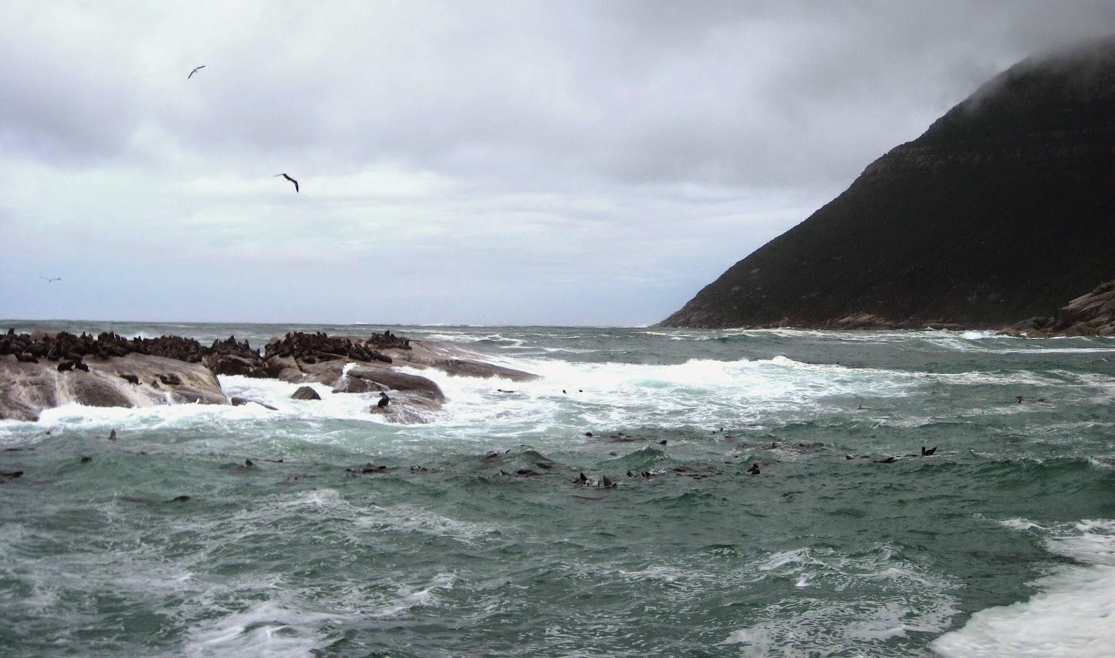 Duiker Island South Africa
