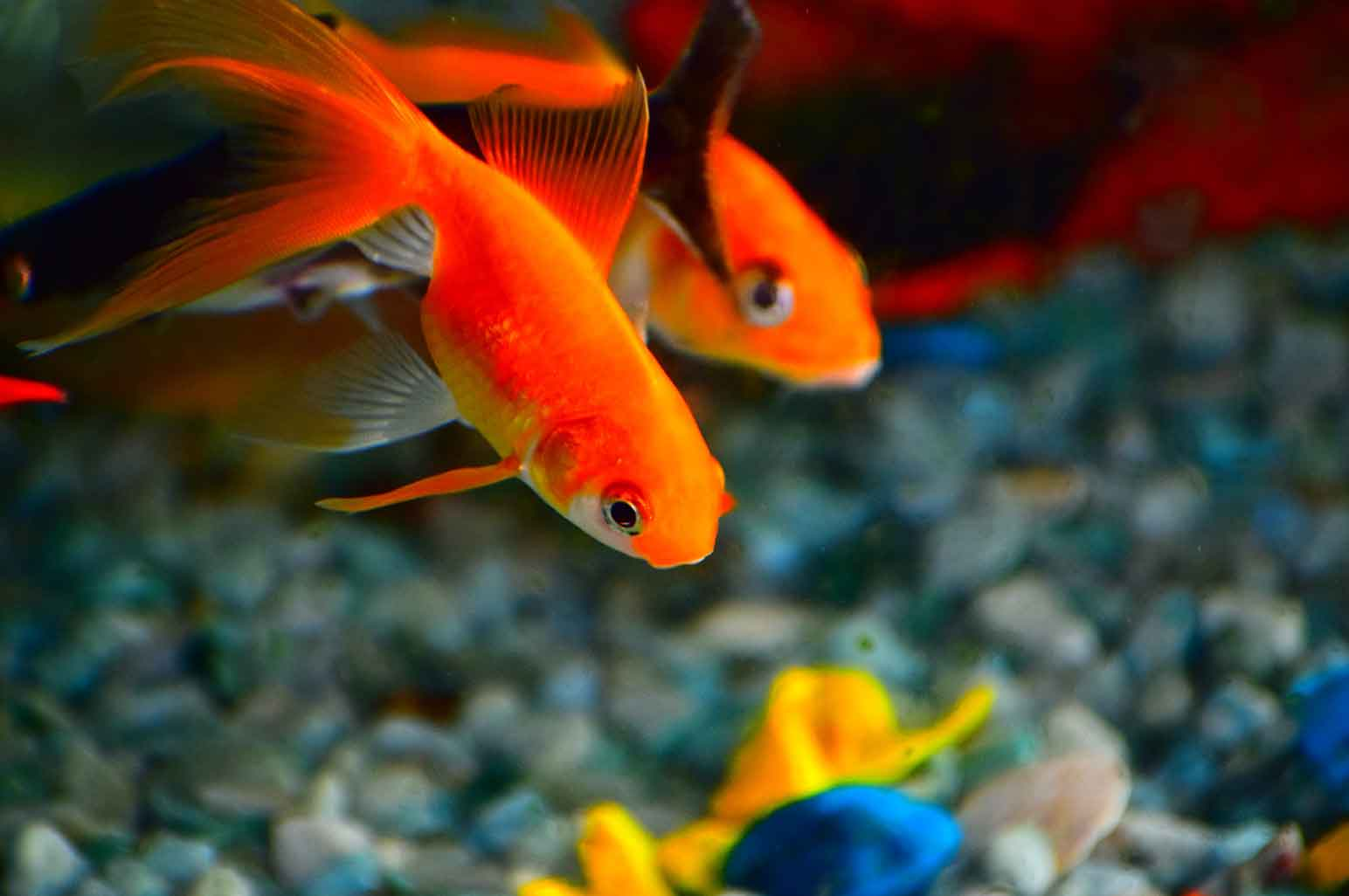 Step by Step Guide Every Aquarium Fishkeeper Should Follow